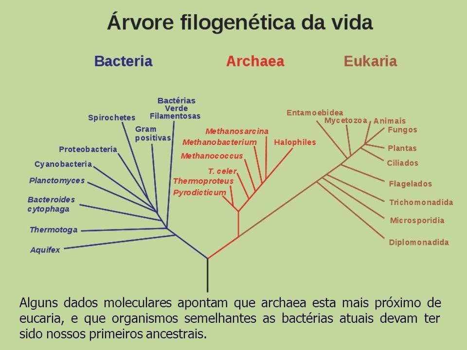 Alguns dados moleculares apontam que archaea esta mais próximo de eucaria, e que organismos semelhantes as bactérias atuais devam ter sido nossos primeiros ancestrais.