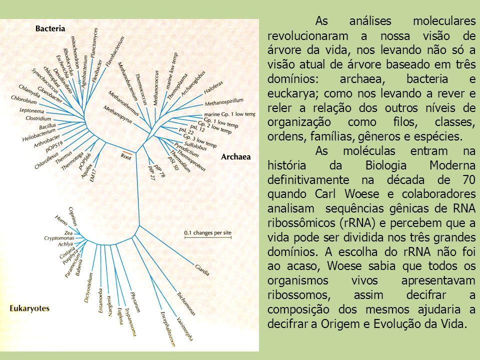 As análises moleculares revolucionaram a nossa visão de árvore da vida, nos levando não só a visão atual de árvore baseado em três domínios: archaea, bacteria e euckarya; como nos levando a rever e reler a relação dos outros níveis de organização como filos, classes, ordens, famílias, gêneros e espécies.