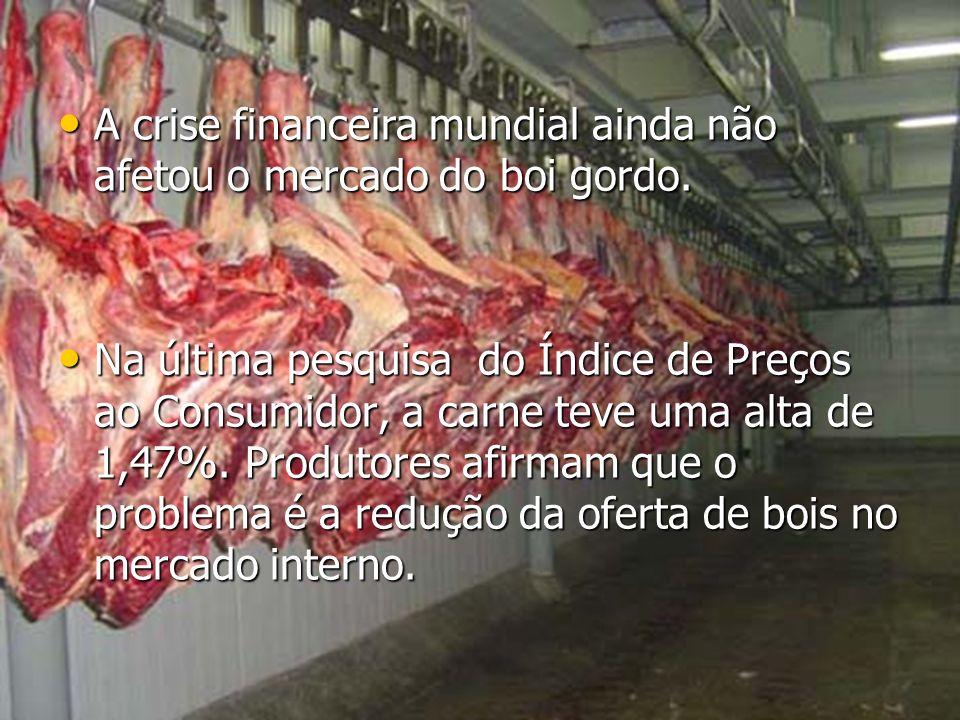 A crise financeira mundial ainda não afetou o mercado do boi gordo.