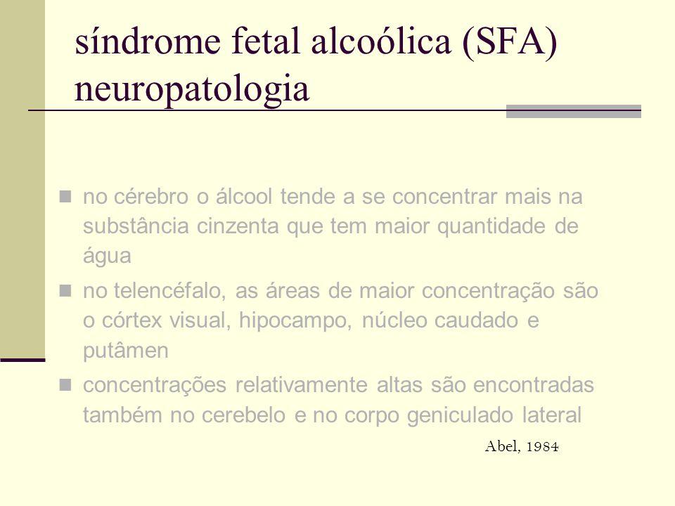 síndrome fetal alcoólica (SFA) neuropatologia