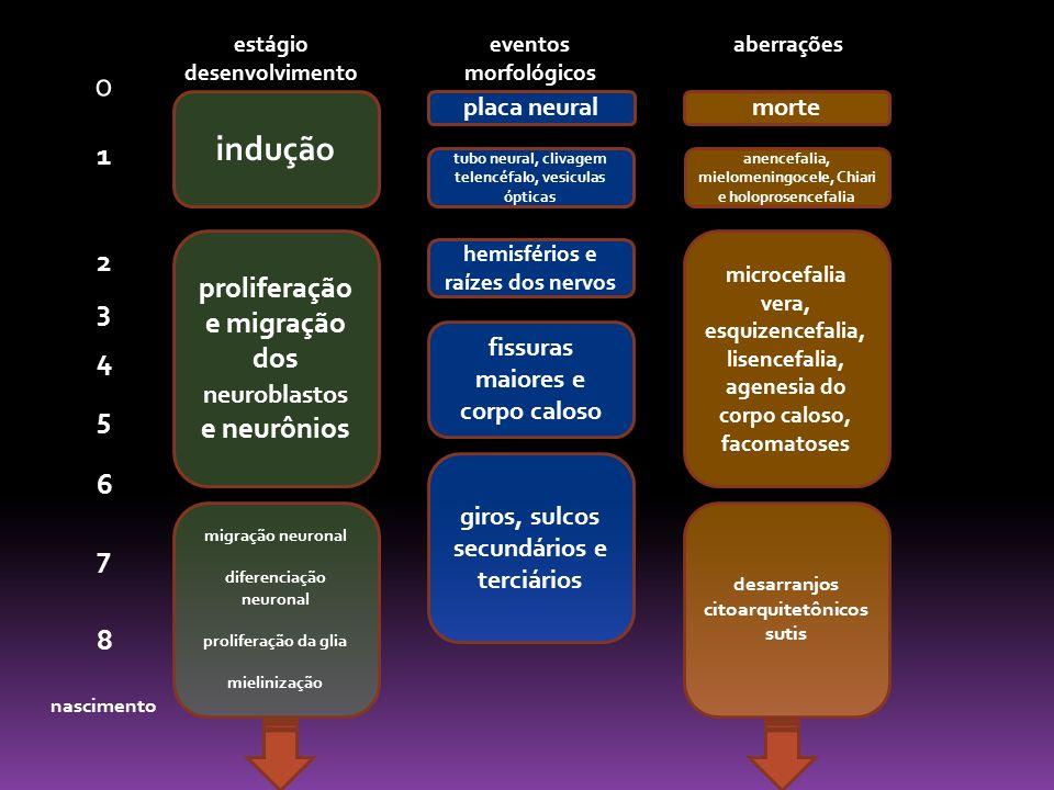 indução 1 2 proliferação e migração dos neuroblastos e neurônios 3 4 5
