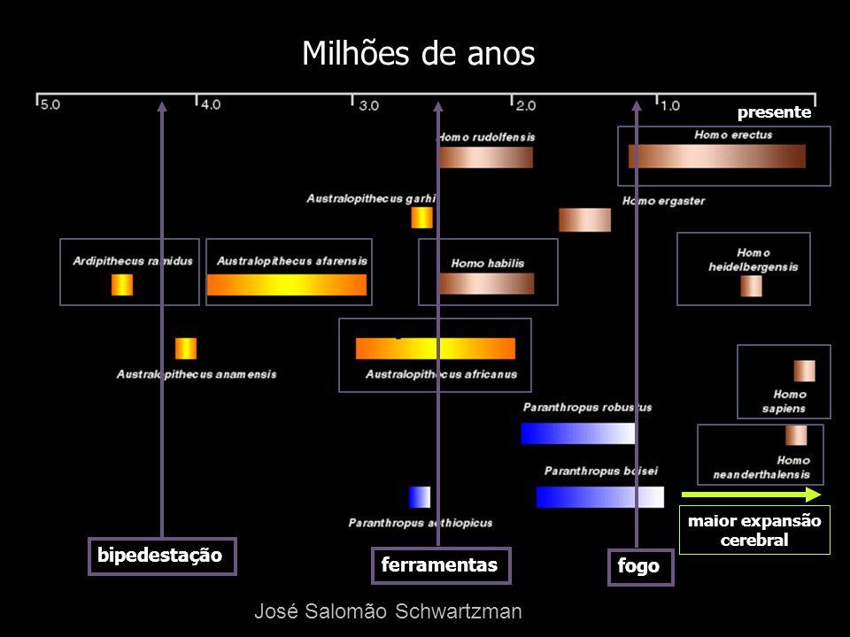 Milhões de anos José Salomão Schwartzman bipedestação ferramentas fogo