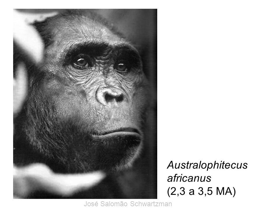 Australophitecus africanus (2,3 a 3,5 MA) José Salomão Schwartzman