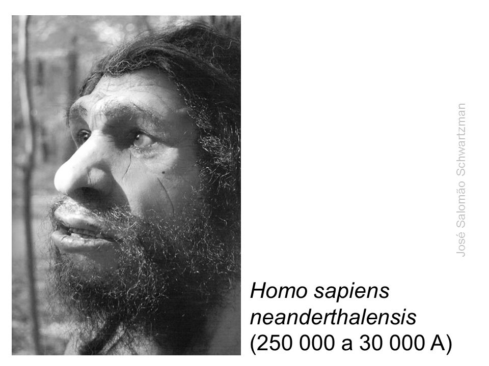 Homo sapiens neanderthalensis (250 000 a 30 000 A)