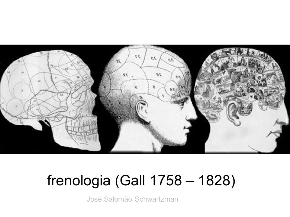 frenologia (Gall 1758 – 1828) José Salomão Schwartzman