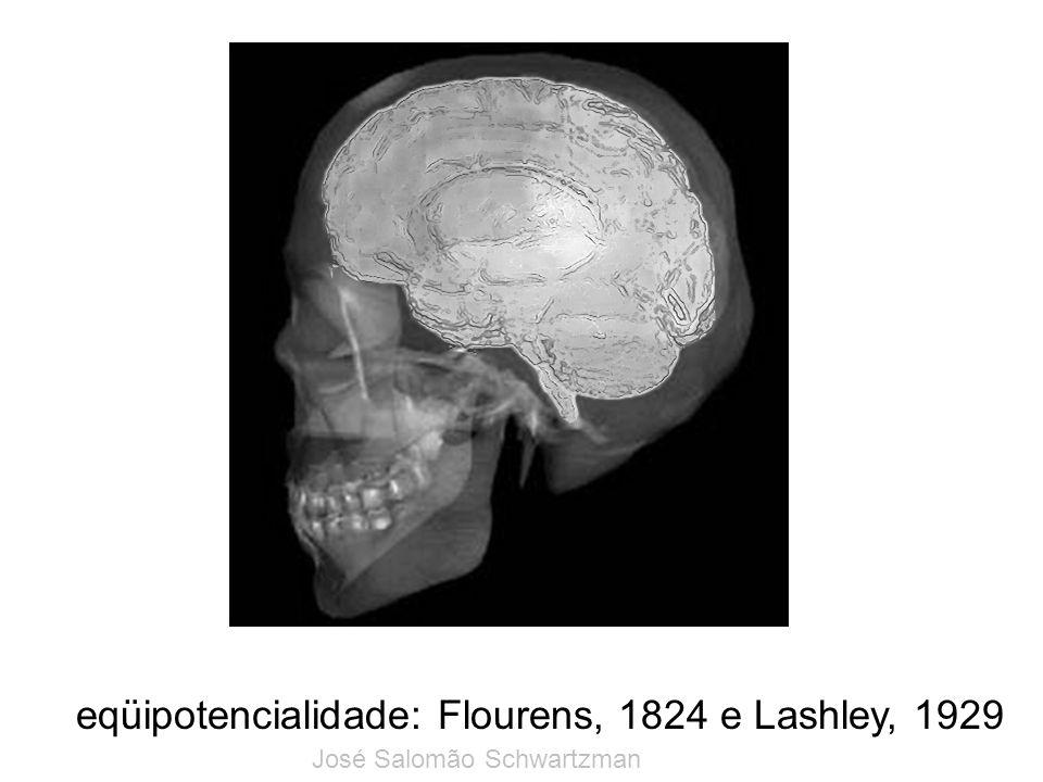 eqüipotencialidade: Flourens, 1824 e Lashley, 1929