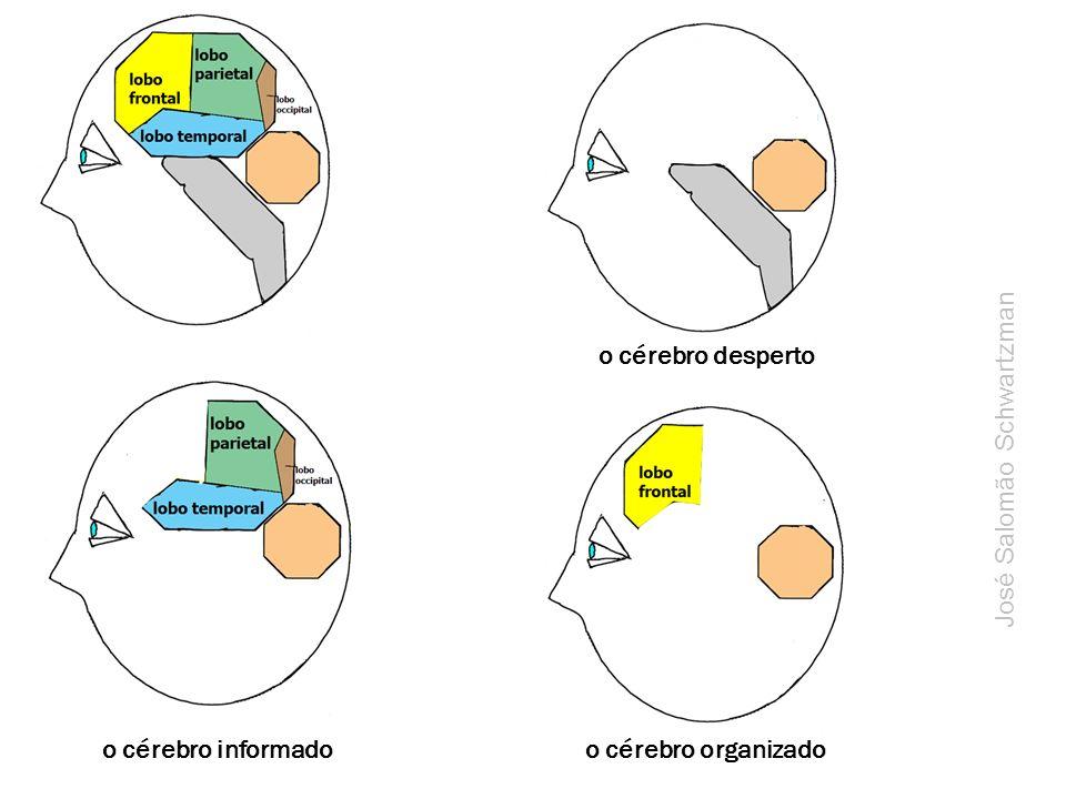 o cérebro desperto José Salomão Schwartzman o cérebro informado o cérebro organizado