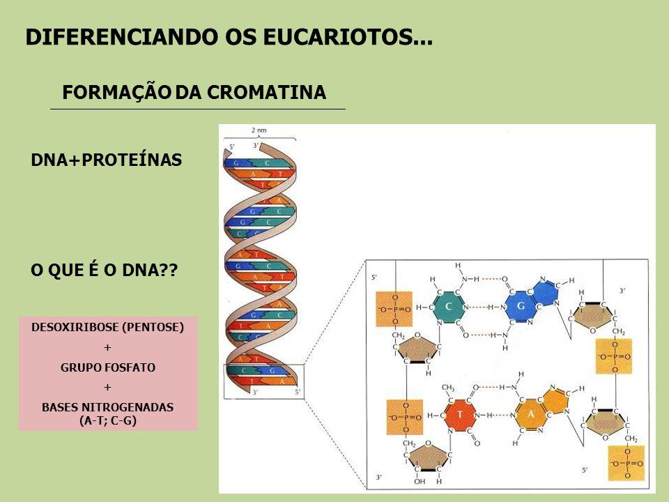 DESOXIRIBOSE (PENTOSE) BASES NITROGENADAS (A-T; C-G)