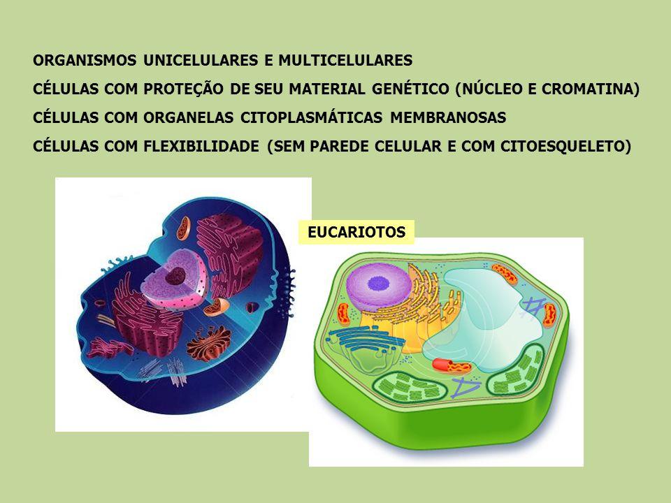 EUCARIOTOS ORGANISMOS UNICELULARES E MULTICELULARES. CÉLULAS COM PROTEÇÃO DE SEU MATERIAL GENÉTICO (NÚCLEO E CROMATINA)