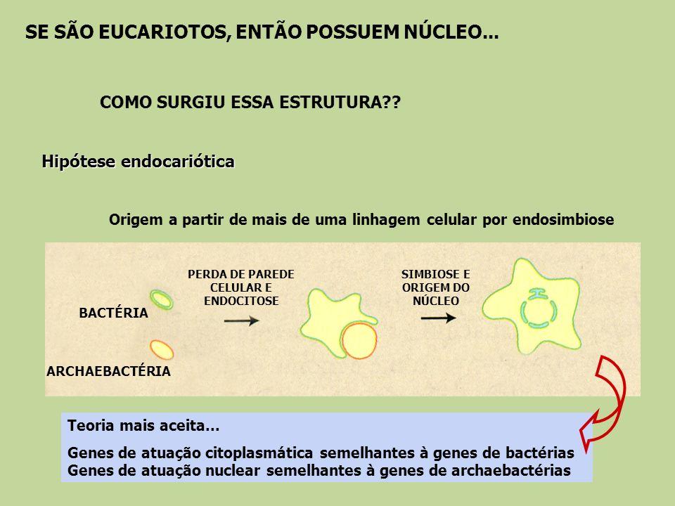 PERDA DE PAREDE CELULAR E ENDOCITOSE SIMBIOSE E ORIGEM DO NÚCLEO