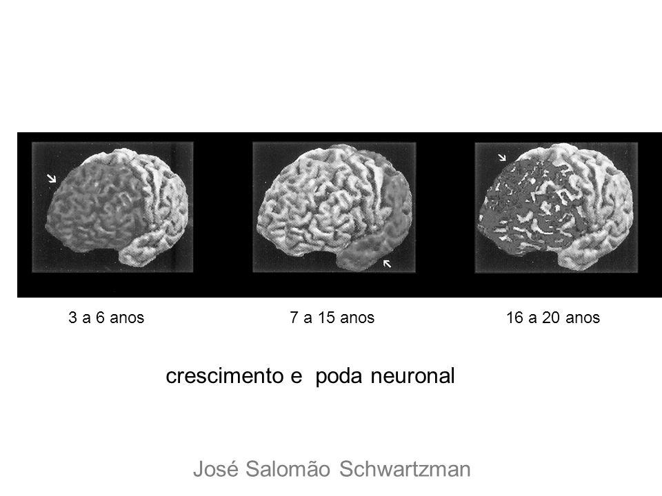 crescimento e poda neuronal
