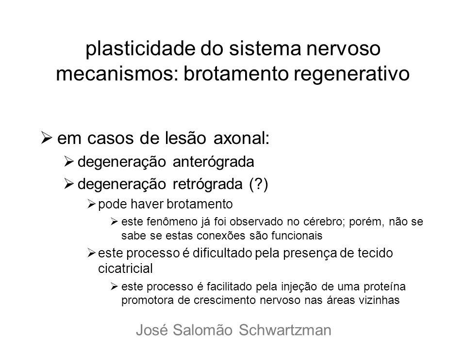 plasticidade do sistema nervoso mecanismos: brotamento regenerativo