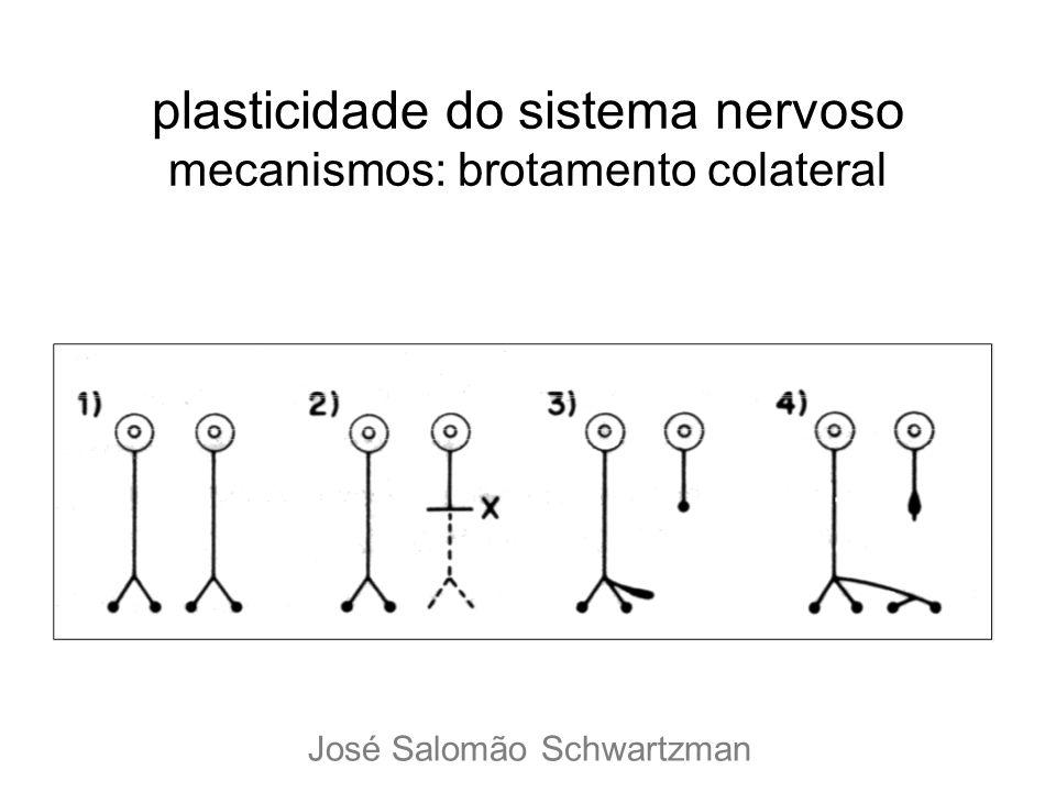 plasticidade do sistema nervoso mecanismos: brotamento colateral