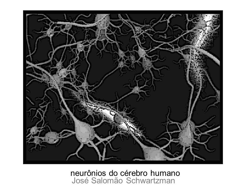 neurônios do cérebro humano