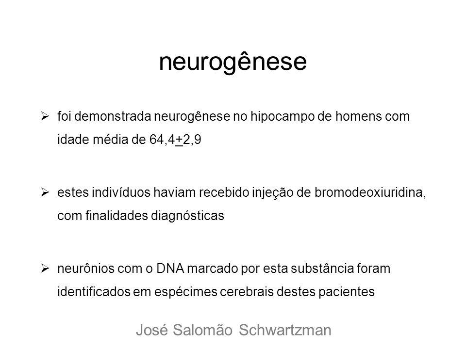 neurogênese José Salomão Schwartzman