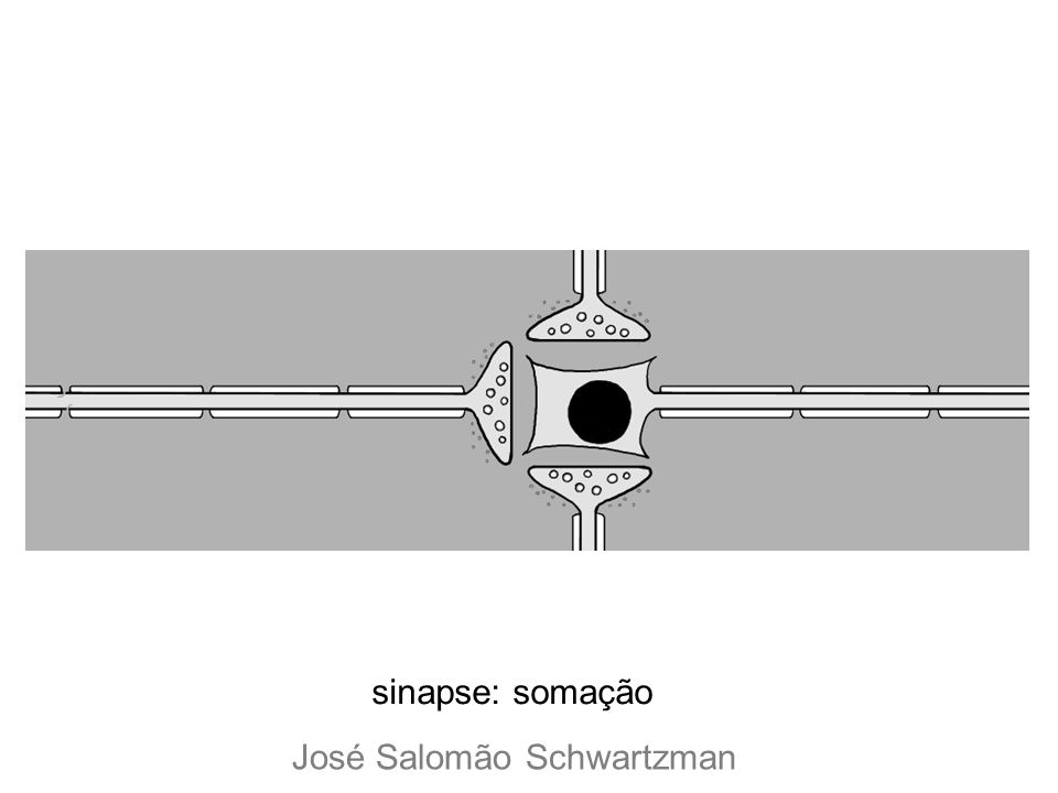 sinapse: somação José Salomão Schwartzman