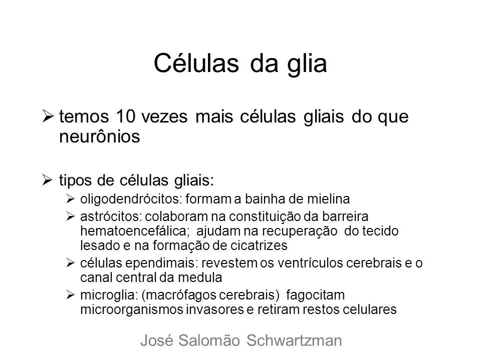 Células da glia temos 10 vezes mais células gliais do que neurônios