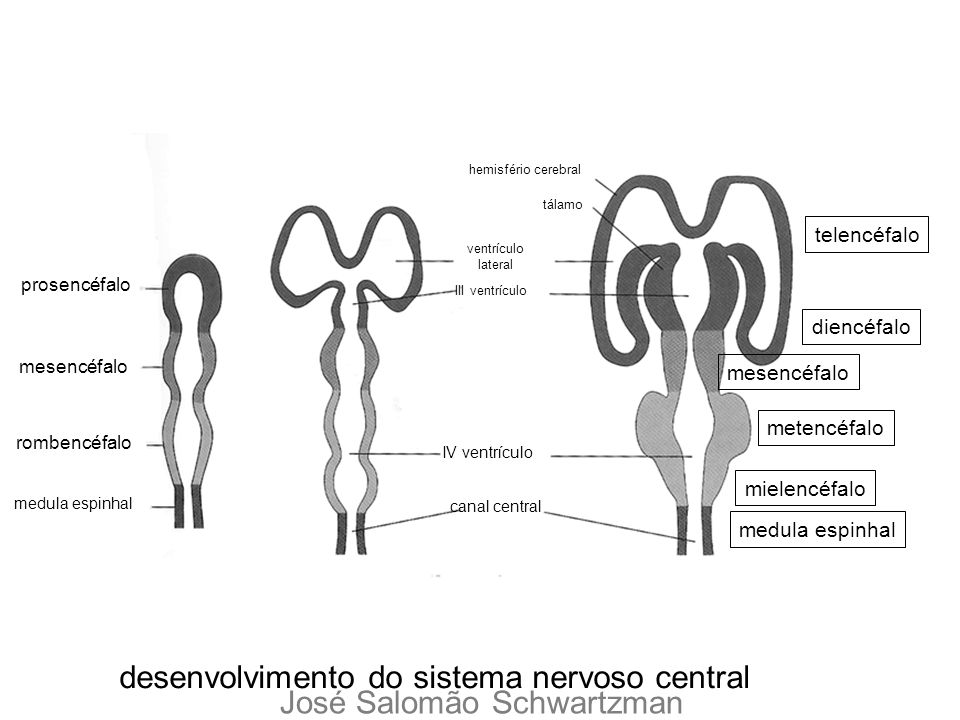 desenvolvimento do sistema nervoso central José Salomão Schwartzman