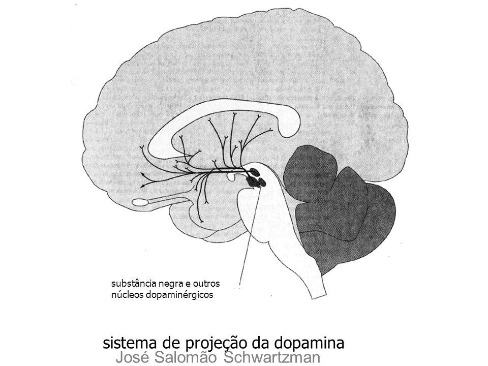 sistema de projeção da dopamina José Salomão Schwartzman