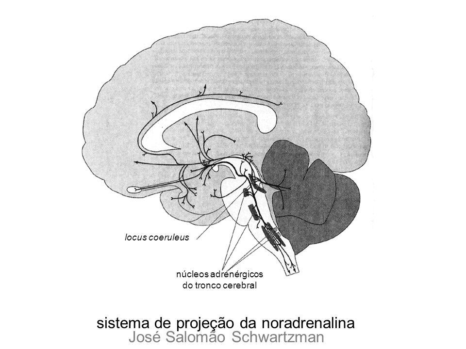 sistema de projeção da noradrenalina José Salomão Schwartzman