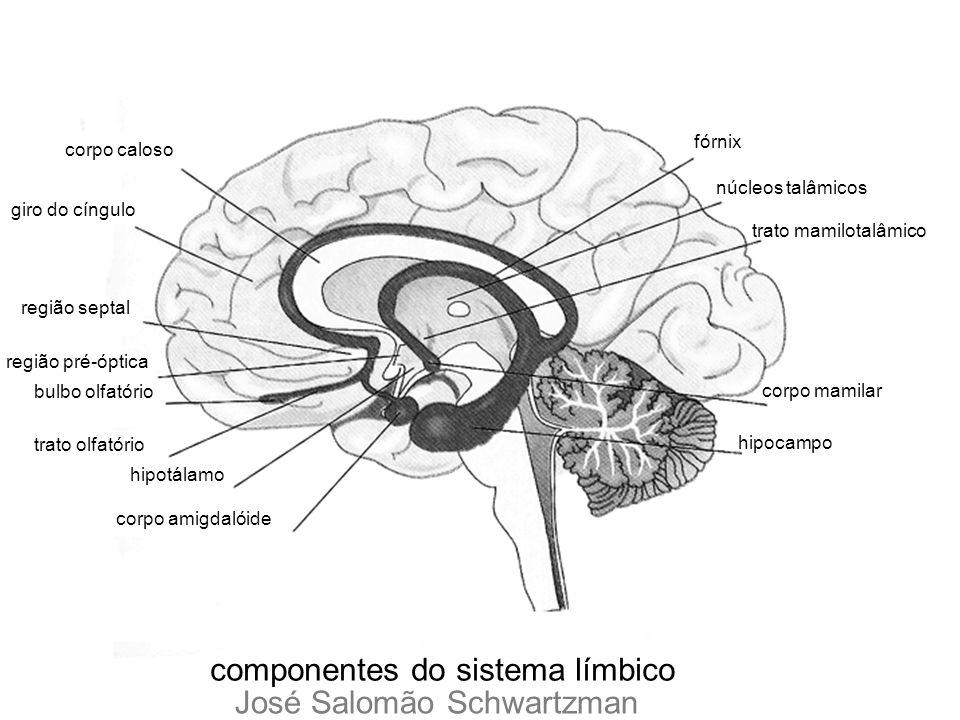 componentes do sistema límbico José Salomão Schwartzman
