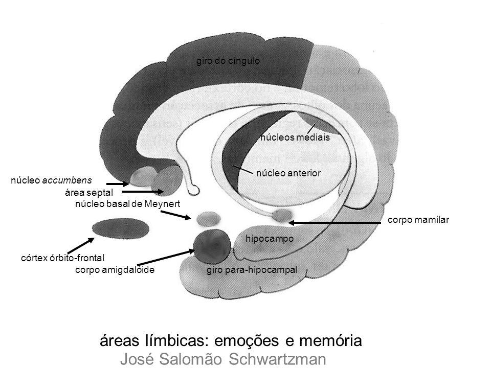 áreas límbicas: emoções e memória José Salomão Schwartzman