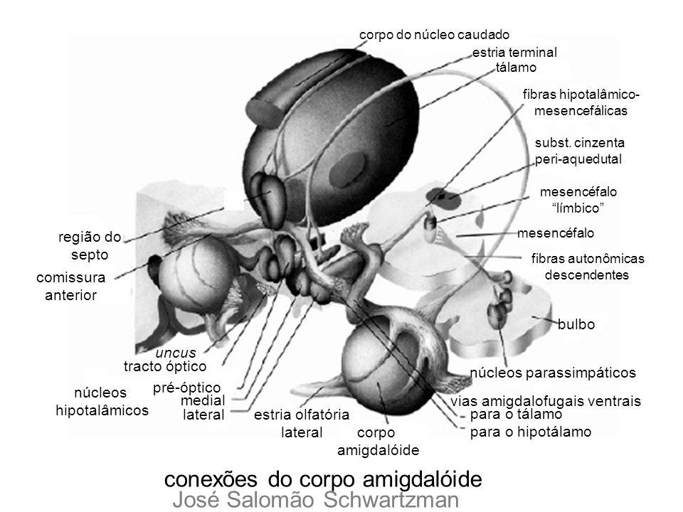 núcleos parassimpáticos