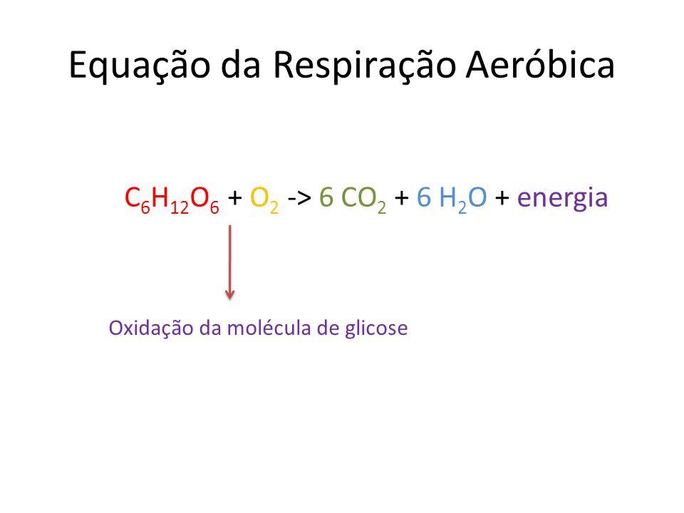 Equação da Respiração Aeróbica