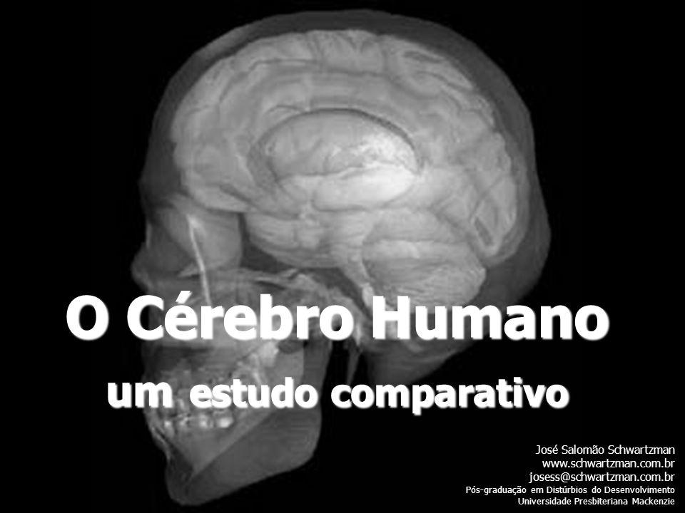 O Cérebro Humano um estudo comparativo