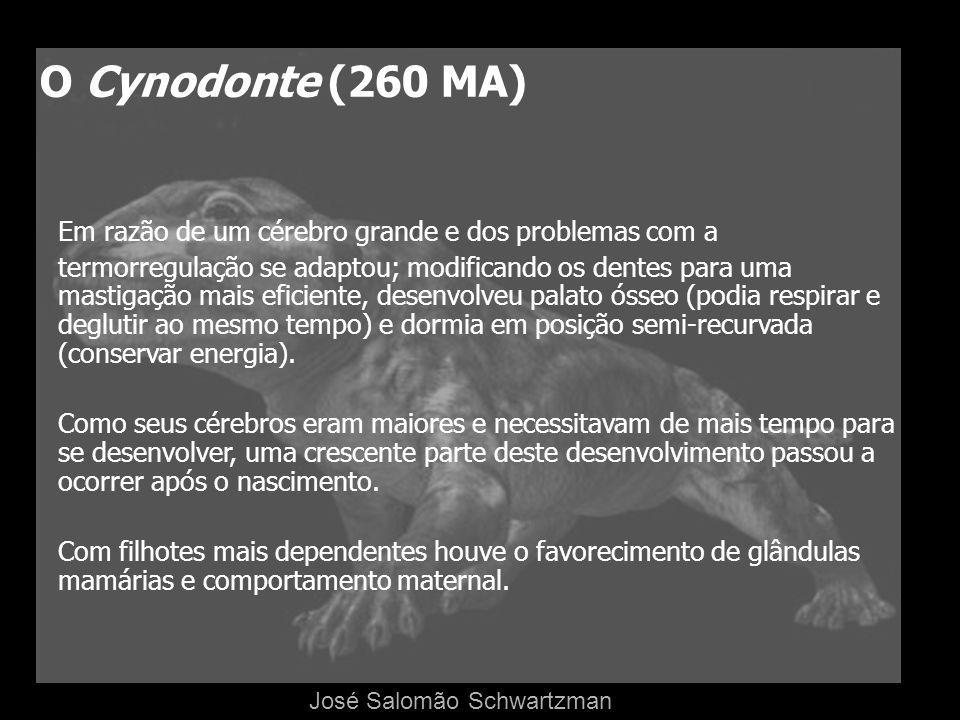 O Cynodonte (260 MA)Em razão de um cérebro grande e dos problemas com a.