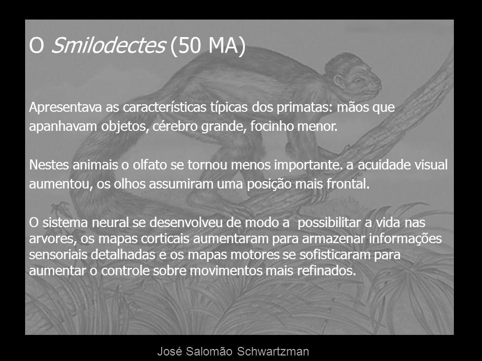 O Smilodectes (50 MA)Apresentava as características típicas dos primatas: mãos que. apanhavam objetos, cérebro grande, focinho menor.