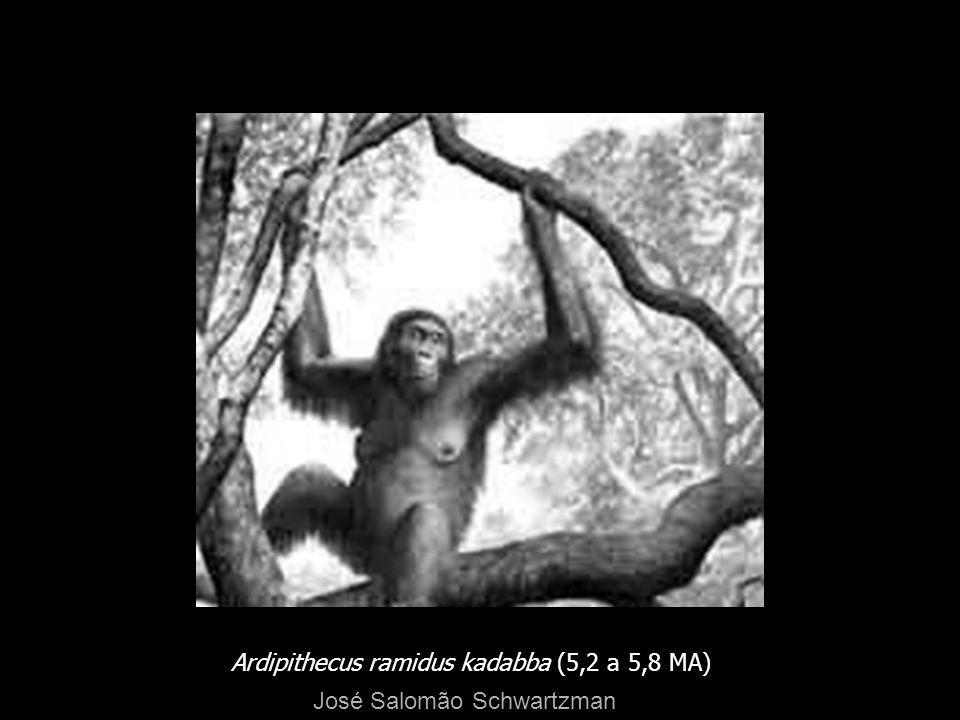 Ardipithecus ramidus kadabba (5,2 a 5,8 MA)