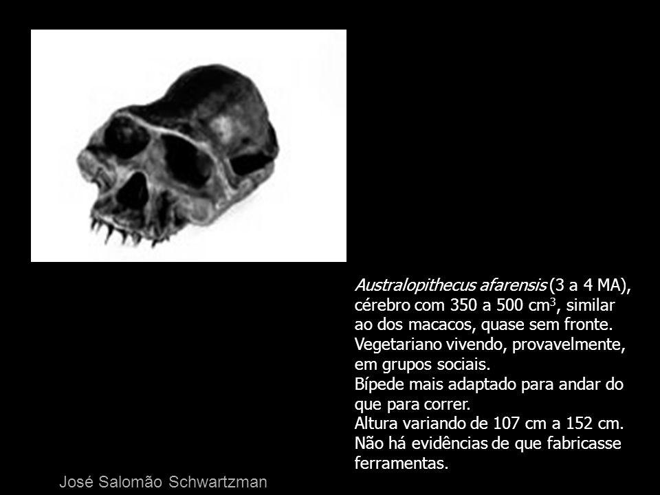 Australopithecus afarensis (3 a 4 MA),