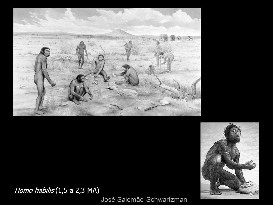 Homo habilis (1,5 a 2,3 MA) José Salomão Schwartzman