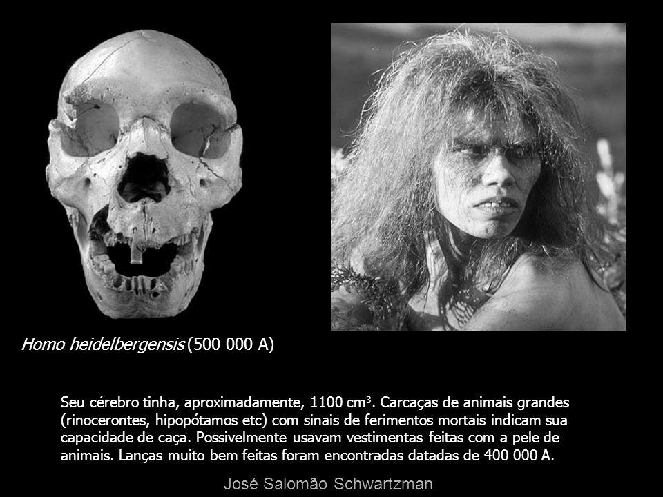 Homo heidelbergensis (500 000 A)