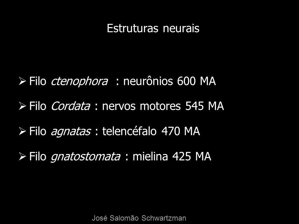 Filo ctenophora : neurônios 600 MA