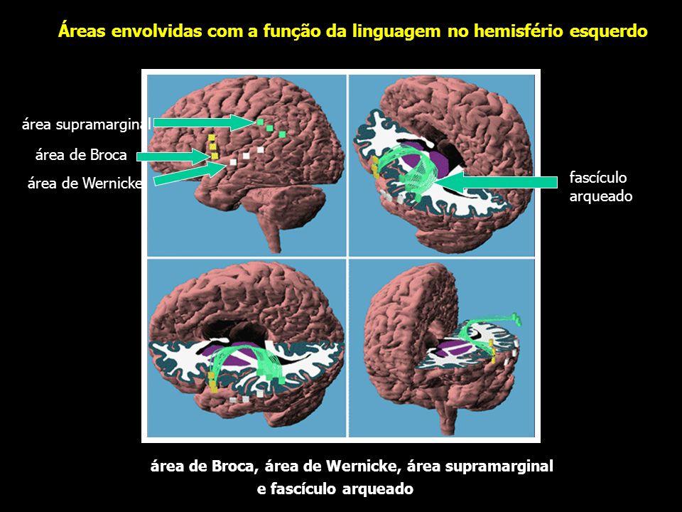 Áreas envolvidas com a função da linguagem no hemisfério esquerdo