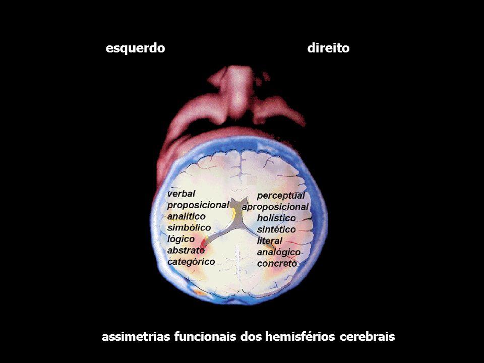 direito esquerdo assimetrias funcionais dos hemisférios cerebrais