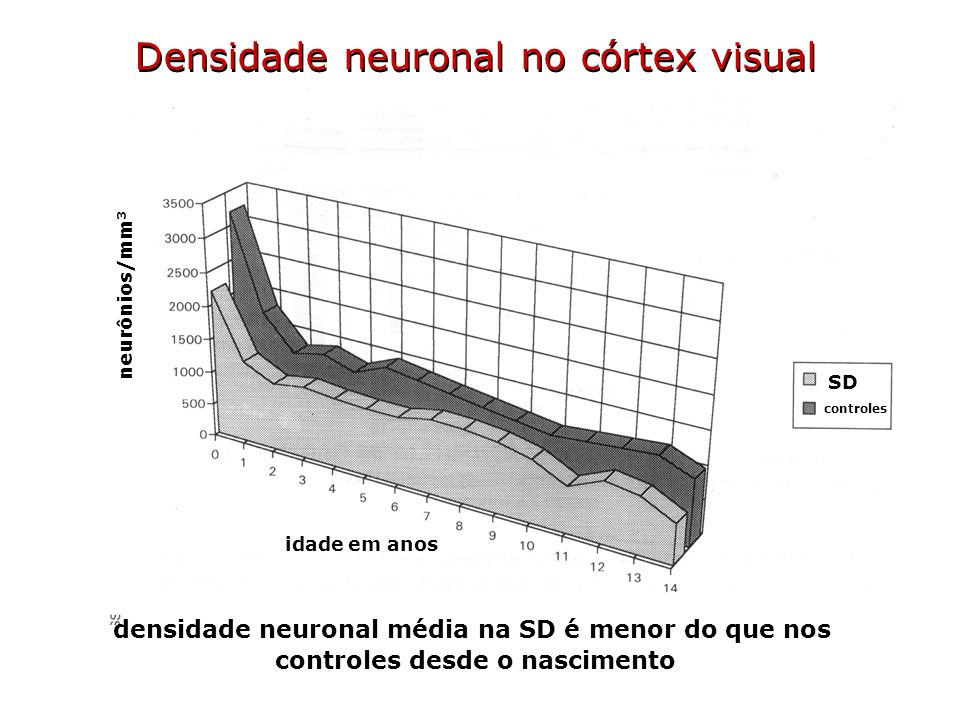 Densidade neuronal no córtex visual