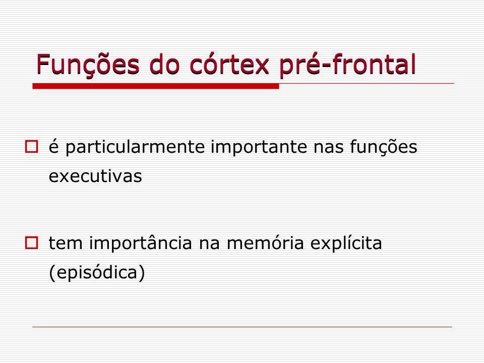 Funções do córtex pré-frontal