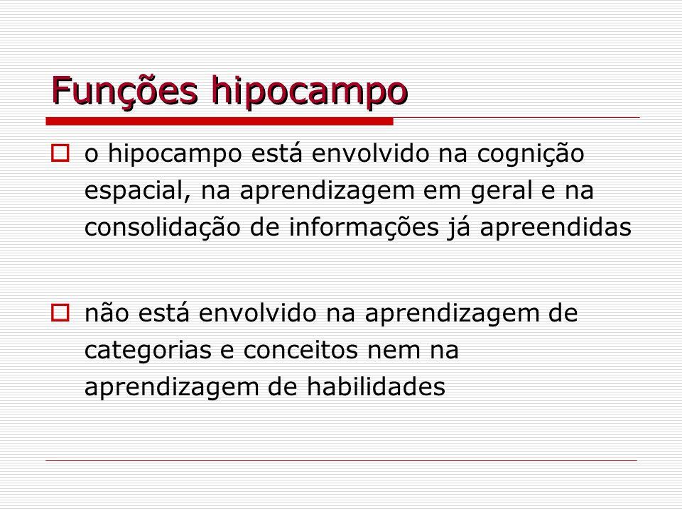 Funções hipocampoo hipocampo está envolvido na cognição espacial, na aprendizagem em geral e na consolidação de informações já apreendidas.