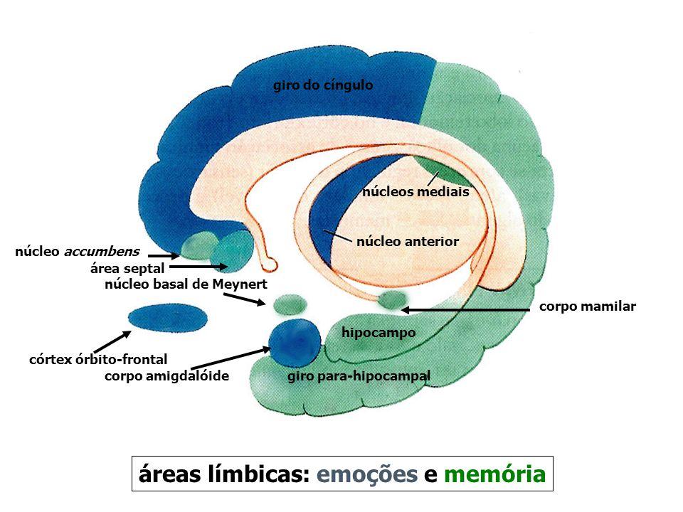 áreas límbicas: emoções e memória