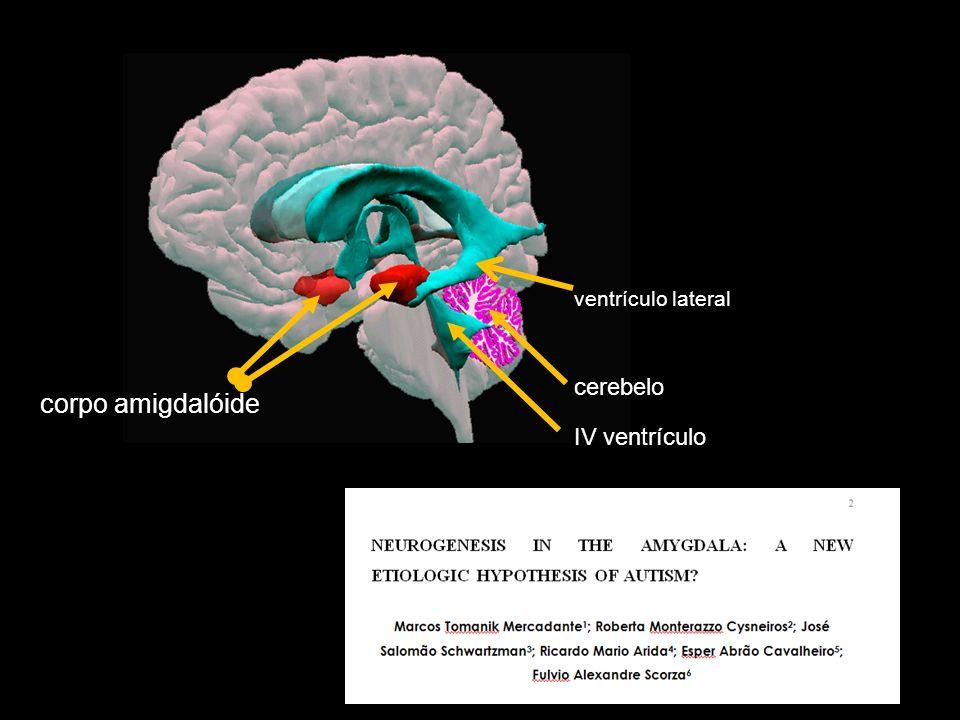 corpo amigdalóide ventrículo lateral cerebelo IV ventrículo