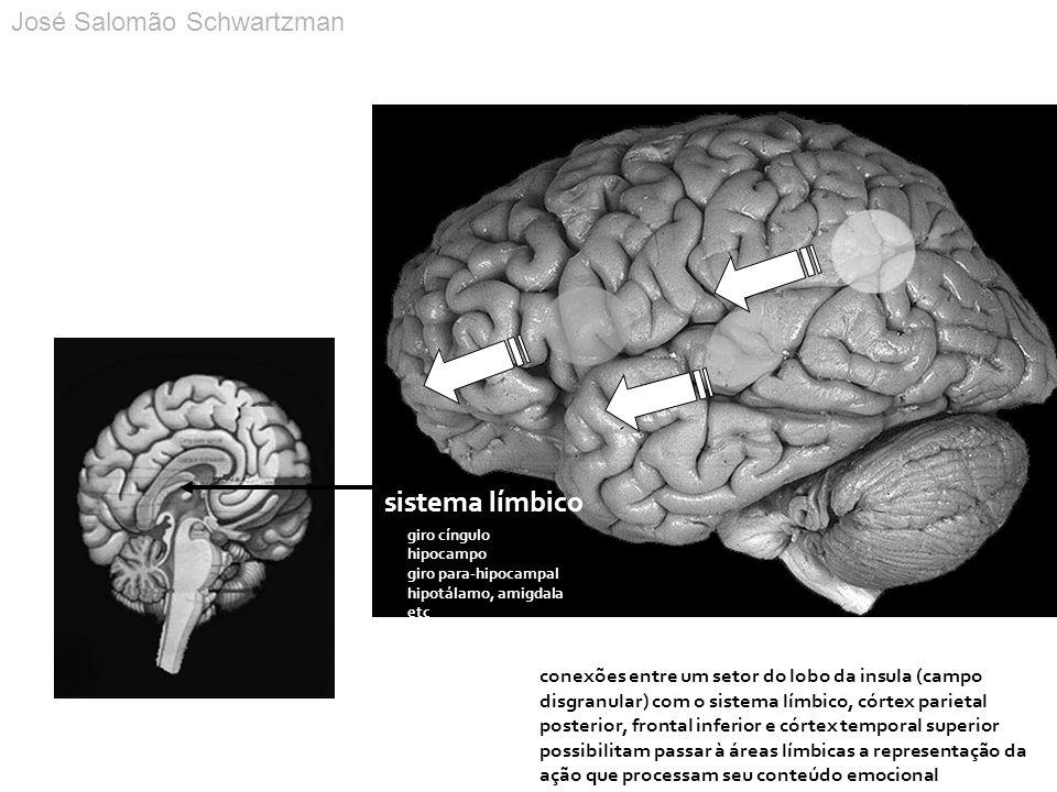 sistema límbico José Salomão Schwartzman