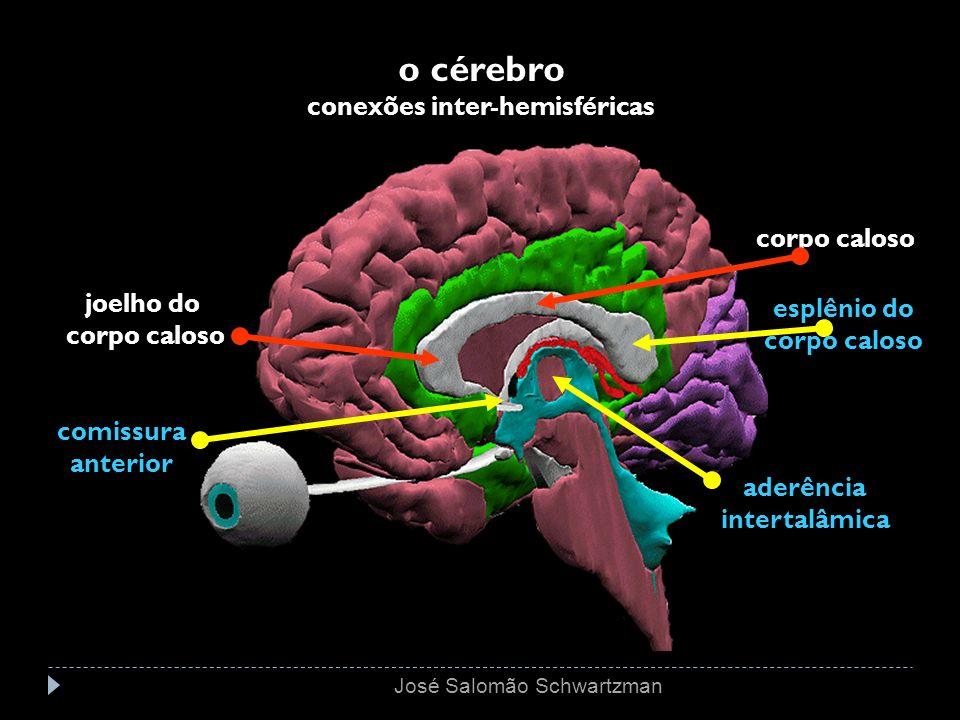 o cérebro conexões inter-hemisféricas