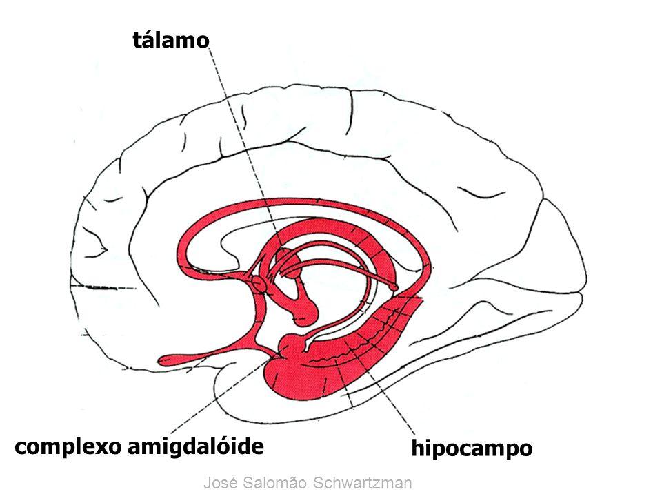 tálamo complexo amigdalóide hipocampo José Salomão Schwartzman