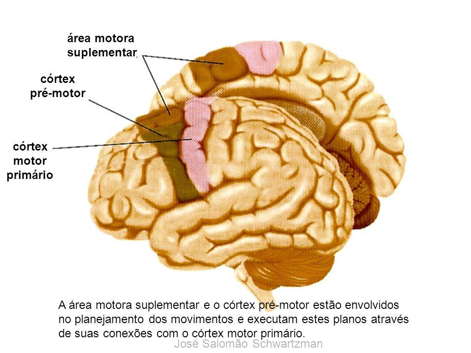 área motora suplementar. córtex. pré-motor. córtex. motor. primário.