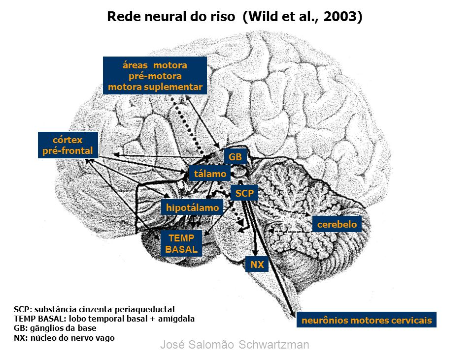 Rede neural do riso (Wild et al., 2003)