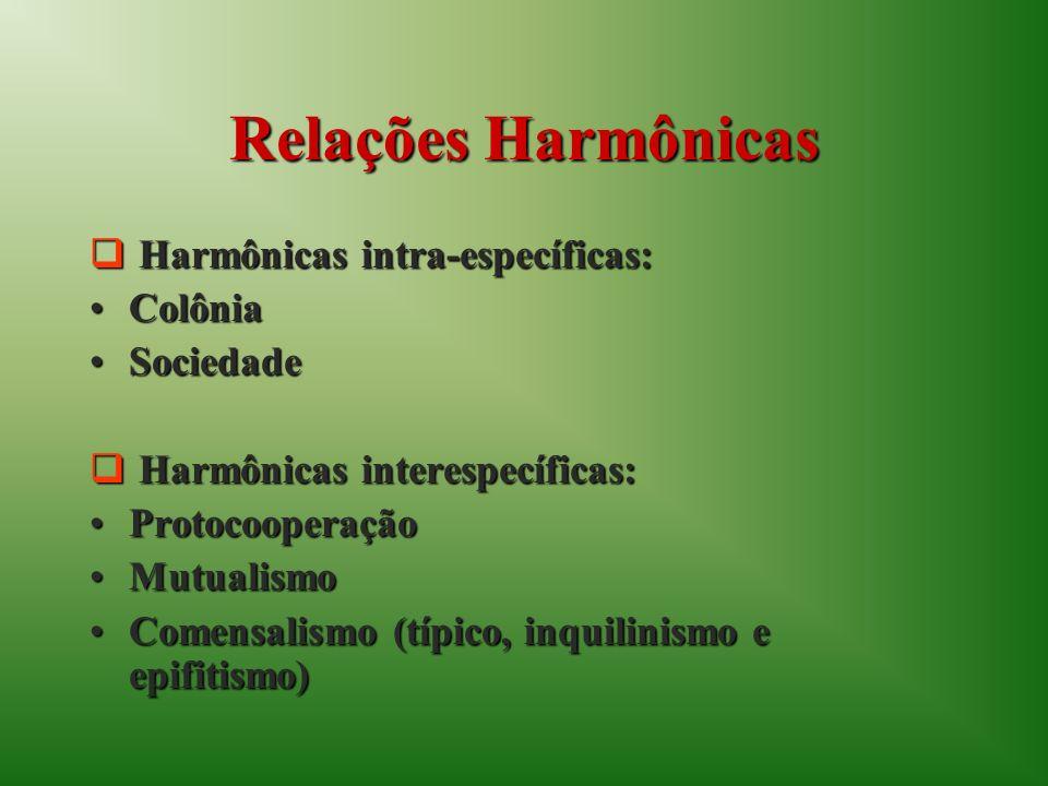 Relações Harmônicas Harmônicas intra-específicas: Colônia Sociedade