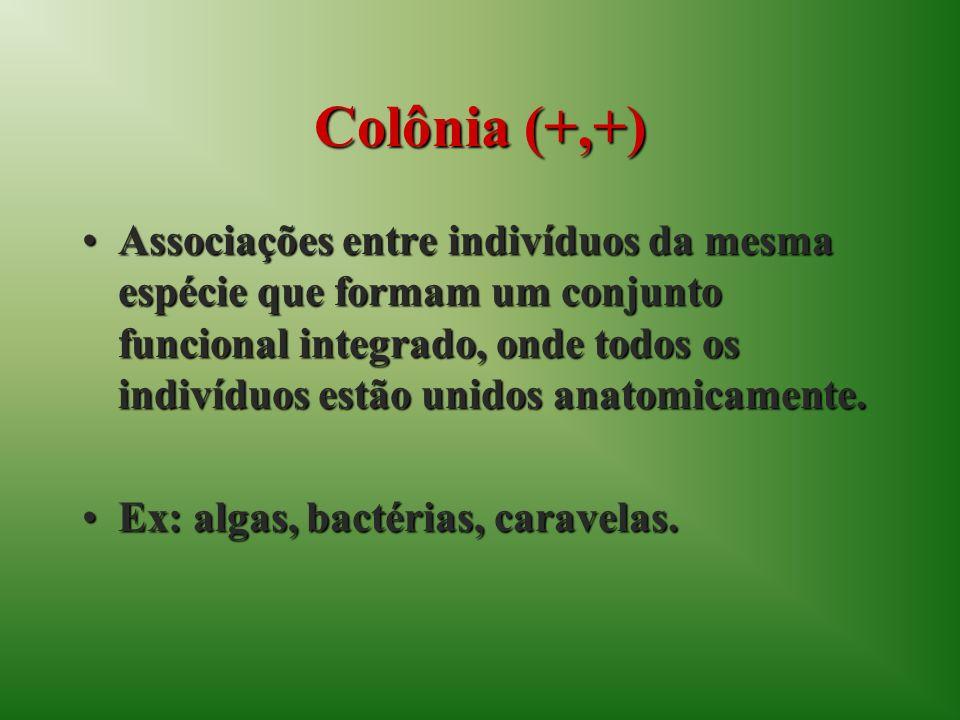 Colônia (+,+)